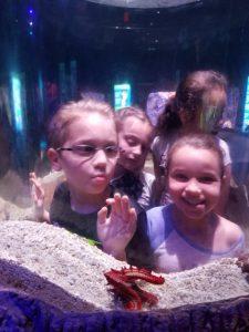 girls looking in a tank