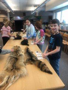 students examining animal pelts