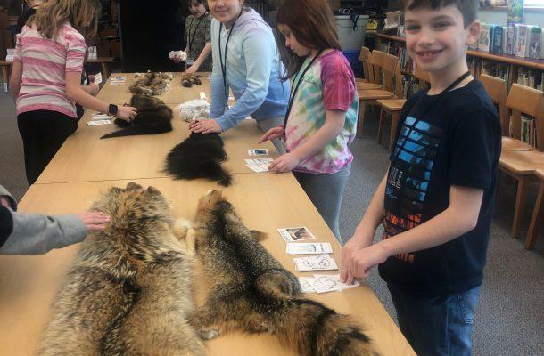 students examining animal pelts