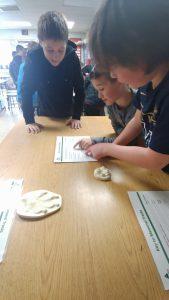 students identifying paw prints