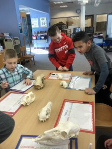 boys surround table to identify animal skulls