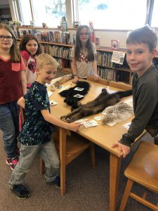 students looking at animal pelts