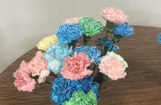 carnations in various colors and shades