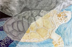 a hand-drawn sea turtle using yellow, blue and grey colors